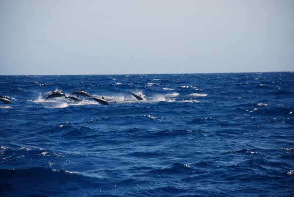 Картинки по запросу выход на китов на мадейре